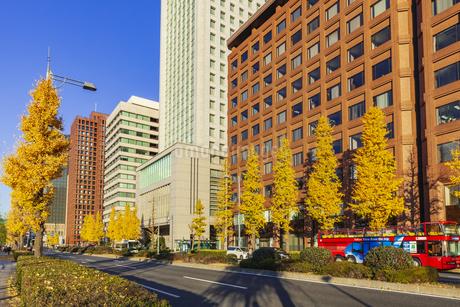 紅葉の木立と丸の内ビル群の写真素材 [FYI01253369]