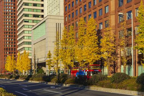紅葉の木立と丸の内ビル群の写真素材 [FYI01253370]