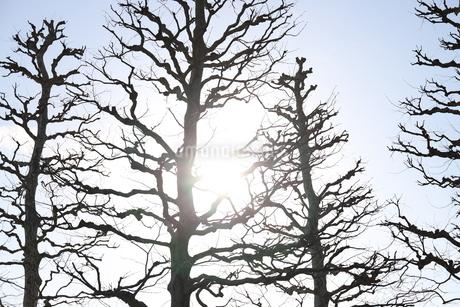 木の写真素材 [FYI01253405]