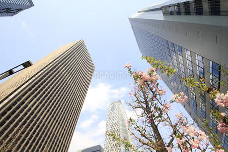 新宿高層ビル群と青空の写真素材 [FYI01253467]