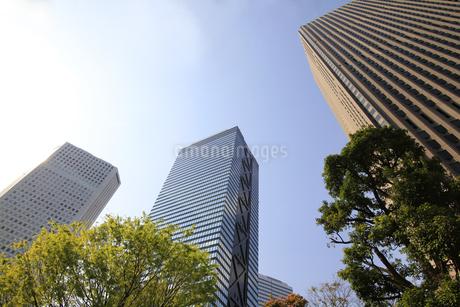 新宿高層ビル群と青空の写真素材 [FYI01253469]