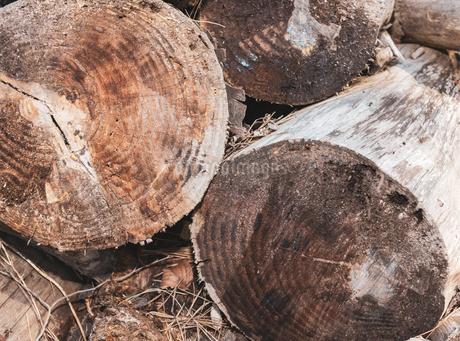 木の年輪 切り株の写真素材 [FYI01253480]