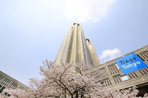 都庁と青空の写真素材 [FYI01253519]
