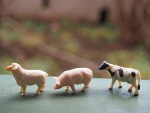 三匹の家畜の写真素材 [FYI01253523]