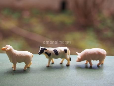 ミニチュアの三匹の家畜2の写真素材 [FYI01253524]