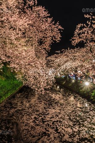 春のライトアップされた弘前城跡の風景の写真素材 [FYI01253667]
