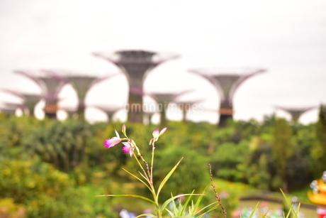 一輪の花の先に・・・の写真素材 [FYI01253686]