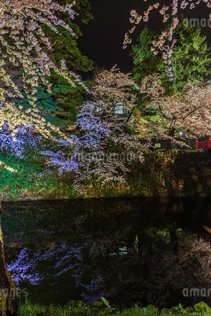 春のライトアップされた弘前城跡の風景の写真素材 [FYI01253747]