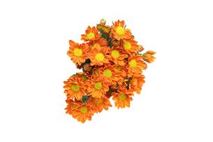 菊の花束の写真素材 [FYI01253778]