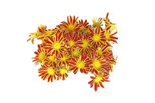 菊の花束の写真素材 [FYI01253779]