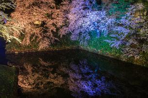 春のライトアップされた弘前城跡の風景の写真素材 [FYI01253785]