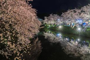 春のライトアップされた弘前城跡の風景の写真素材 [FYI01253788]