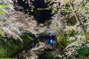 春のライトアップされた弘前城跡の風景の写真素材 [FYI01253800]