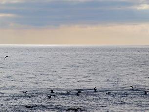 北海道 夕方の海の写真素材 [FYI01254089]