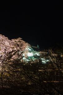 春のライトアップされた弘前城跡の移転した天守と修復中の石垣の風景の写真素材 [FYI01254124]