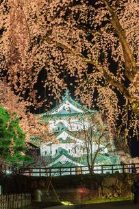 春のライトアップされた弘前城跡の移転した天守の風景の写真素材 [FYI01254126]