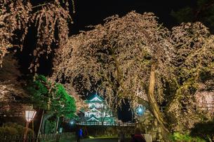 春のライトアップされた弘前城跡の移転した天守の風景の写真素材 [FYI01254127]