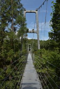 吊り橋の写真素材 [FYI01254149]