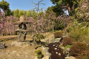 石灯篭と枝垂れ梅の写真素材 [FYI01254169]