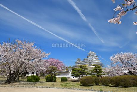 春の姫路城と桜の写真素材 [FYI01254207]