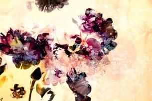 グラフィカルな花のグラフィック素材の写真素材 [FYI01254271]