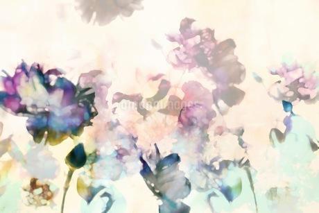 グラフィカルな花のグラフィック素材の写真素材 [FYI01254273]