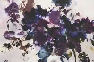 グラフィカルな花のグラフィック素材の写真素材 [FYI01254275]