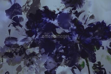 グラフィカルな花のグラフィック素材の写真素材 [FYI01254277]