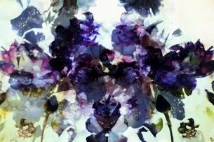 グラフィカルな花のグラフィック素材の写真素材 [FYI01254279]