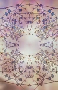 グラフィカルな花のグラフィック素材の写真素材 [FYI01254280]