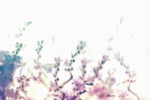 グラフィカルな花のグラフィック素材の写真素材 [FYI01254282]