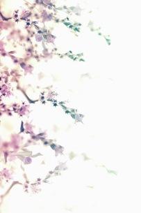 グラフィカルな花のグラフィック素材の写真素材 [FYI01254283]