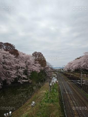 桜と川と線路の写真素材 [FYI01254353]
