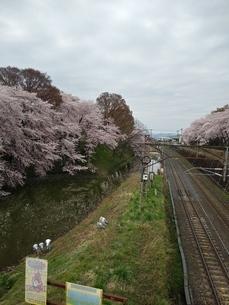 桜と川と線路の写真素材 [FYI01254354]
