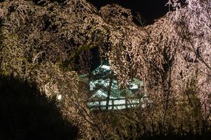 春のライトアップされた弘前城跡の移転した天守の風景の写真素材 [FYI01254361]