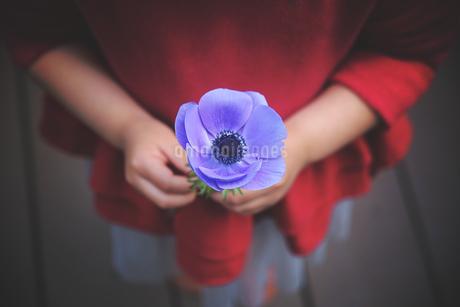 一輪花のアネモネを持つ小さな女の子の写真素材 [FYI01254511]