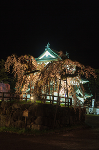 春のライトアップされた弘前城跡の移転した天守の風景の写真素材 [FYI01254539]