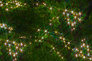 光り輝く木の写真素材 [FYI01254551]