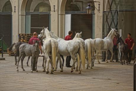オーストリア・ウィーンの馬の写真素材 [FYI01254633]