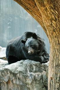 物思いにふけるクマの写真素材 [FYI01254641]