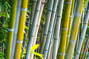 竹林イメージの写真素材 [FYI01254668]
