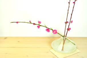 ガラス製の花瓶に入ったももの花の写真素材 [FYI01254807]