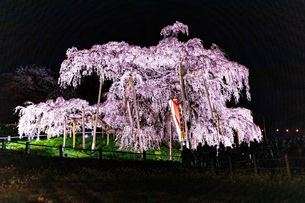 三春滝桜の写真素材 [FYI01254856]