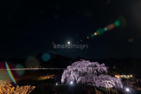 平成最後の十六夜と三春滝桜の写真素材 [FYI01254857]