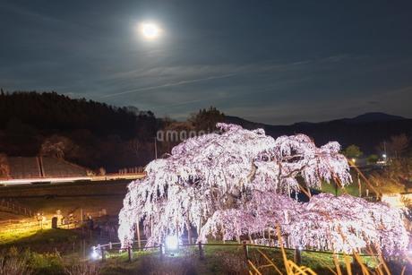 三春滝桜の写真素材 [FYI01254859]