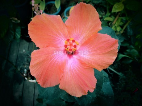 温帯の植物の写真素材 [FYI01254994]