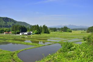 すがすがしい平泉荘園 骨寺の水田の写真素材 [FYI01255078]