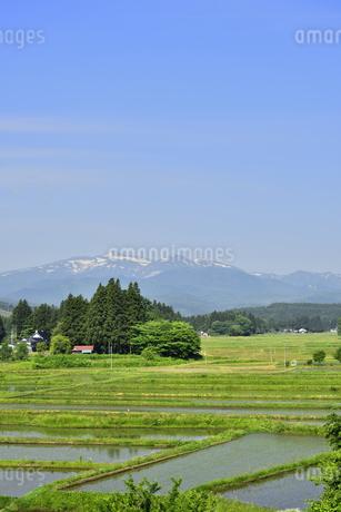 すがすがしい平泉荘園 骨寺の水田の写真素材 [FYI01255079]