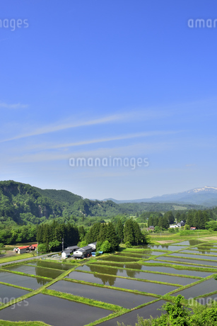すがすがしい平泉荘園 骨寺の水田の写真素材 [FYI01255086]
