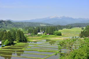 すがすがしい平泉荘園 骨寺の水田の写真素材 [FYI01255088]